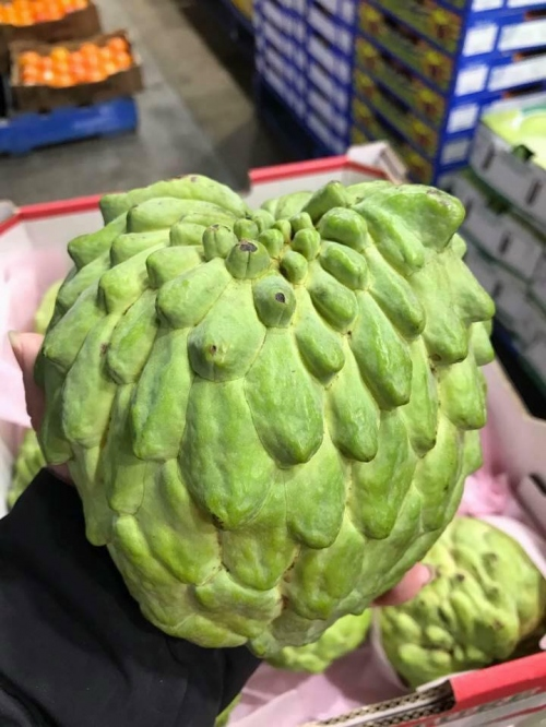 Na Úc Custard Apples Australia 030